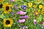 {#flowers-3598555_640}